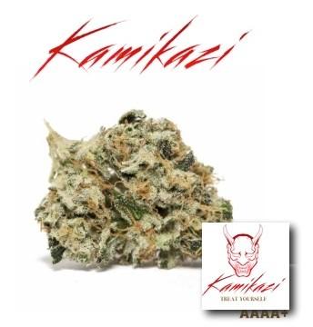 Kosher-Kush-AAA-INDICA